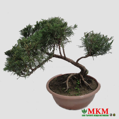 bonsai143