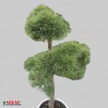 bonsai167