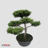 bonsai201_3