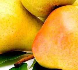Овощен посадъчен материал
