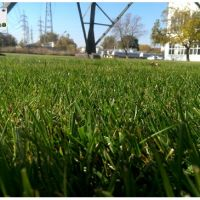 Озеленяване Пловдив услуги